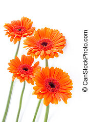 Orange gerbera flowers on white arrangement