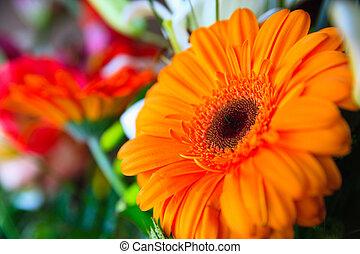 orange gerbera on colored blured nice background