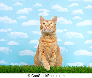 Orange ginger tabby cat sitting in tall grass reaching