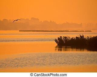 Orange glow sunrise at lake with flying bird