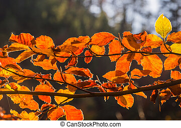orange glowing leaves in the sun at a forest