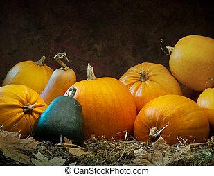 orange gourd lying on the grass on dark background - ...