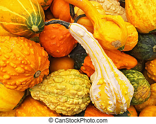 Orange gourds of different shapes
