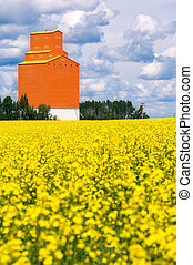 Orange grain elevator sits on the Canadian prairies with a field of yellow canola in foreground.