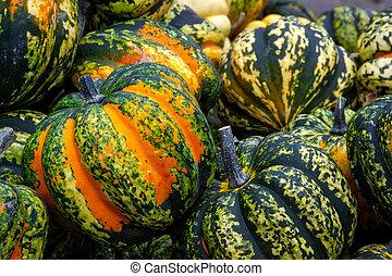Orange Green Spotted Pumpkin Group Closeup Texture Crate Organic Fall Autumn Decoration