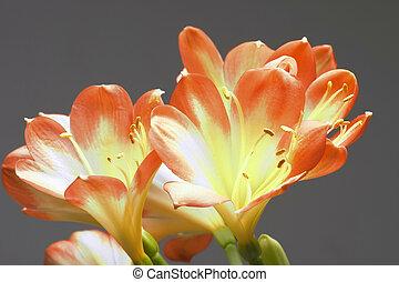 orange, gris, fleurs, ang