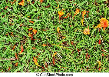 orange, -, herbe, petals.