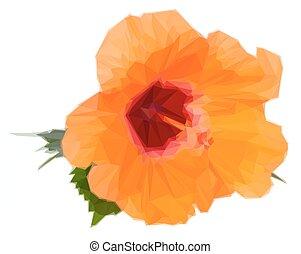 orange hibiscus flower