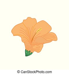 Orange Hibiscus Tropical Flower Hand Drawn Illustration