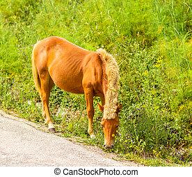 Orange horse grazing