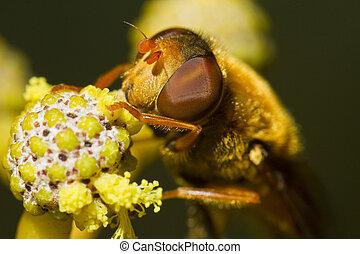 orange, hoverfly