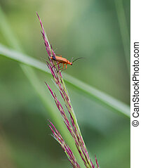 Orange Insect Sitting On Tall Grass