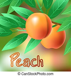 Orange, juicy, sweet peach on a branch for your design. Vector