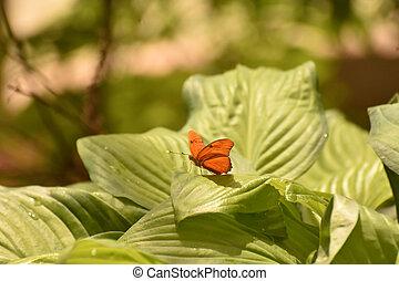 Orange Julia butterfly in the bright sunlight - Beautiful ...