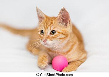 Orange kitten and toy - Orange kitten with a ball on a white...