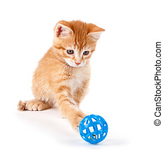 Orange Kitten Playing with a Toy - Cute orange kitten with ...