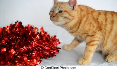 Orange kitten smelling red New Year's Tinsel - Orangekitten...