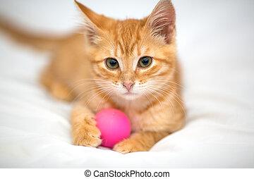 Orange kitten with a ball