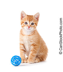 Orange Kitten with a Toy on White - Cute orange kitten with ...
