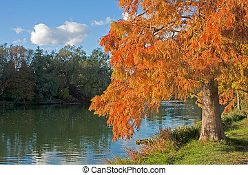 An orange-colored larch tree in the autumn on the shore of a lake or river