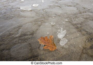 An abstract of am orange leaf on ice in Hauser, Idaho.