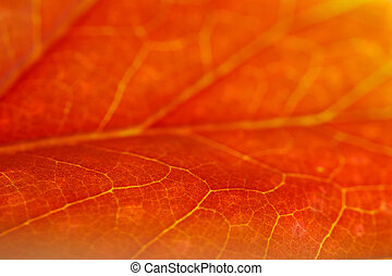 orange leaf, photographed macro