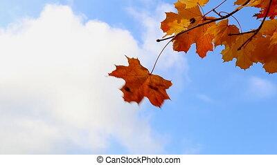 Orange leaves against bright sky