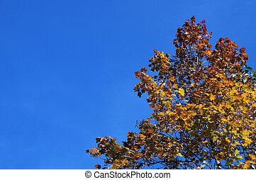 Orange leaves on blue sky