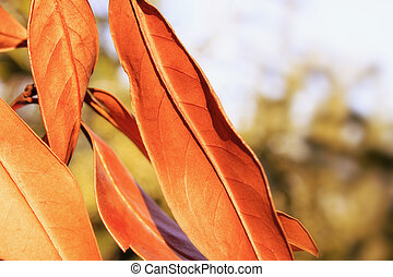 Orange Leaves on Blurred Background Photo