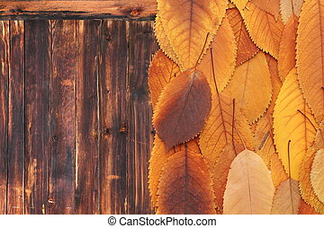 orange leaves on old wooden table