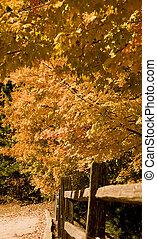 Orange Leaves on Rail Fence