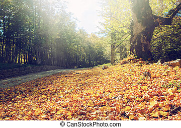Orange leaves on the ground. Concept of fall and autumn