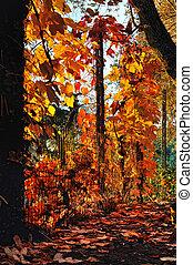 orange leaves with sunrays