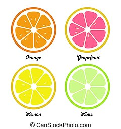 Orange, lemon lime and grapefruit slices. Flat food illustration