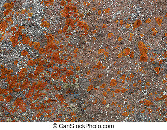 orange lichen background in the stone