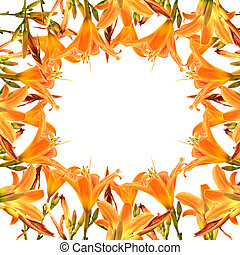 Orange Lilly flower frame isolated on white background