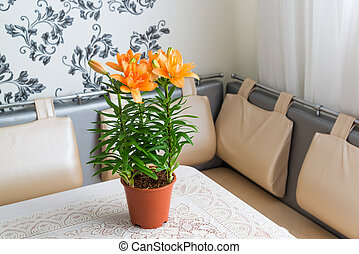 orange lily in interior of room