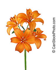 Orange lily isolated on white