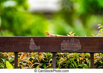 Orange lizard on the steel fence in the falling rain with blur green background.
