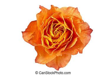 orange, macro, coup, rose