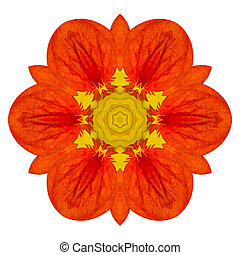 Orange Mandala Flower Kaleidoscopic Isolated on White...