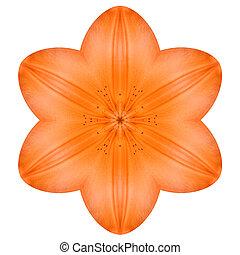 Orange Mandala Lily Flower Kaleidoscope Isolated on White