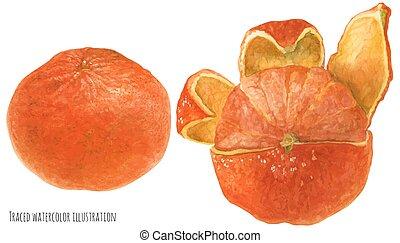 Orange mandarine fruit
