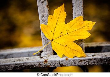 orange maple leaf close up
