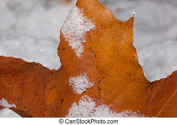 Orange maple leaf covered with hoarfrost. Close up.