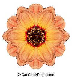 Orange Marigold Mandala Flower Kaleidoscope Isolated on White
