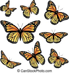 Orange Monarch Butterfly - Collection of an orange monarch...