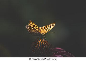 orange monarch butterfly in golden light