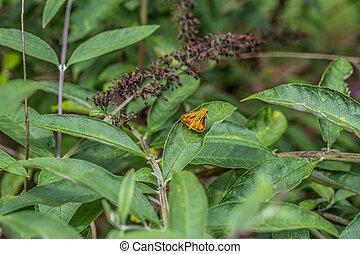 Orange moth on a plant