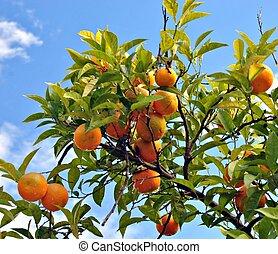 Orange on blue sky